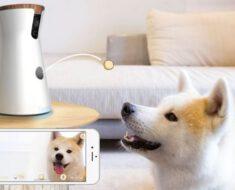 ¡Juega con tu mascota a distancia! Cámara para perros Furbo – opinión